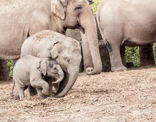 Mum with offspring conspiring