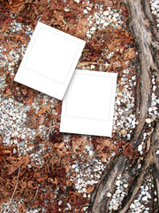 Two square frames on gravel ground and brown dry leaves background