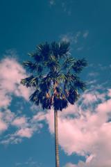 sugar palm tree with sky, image used vintage filter