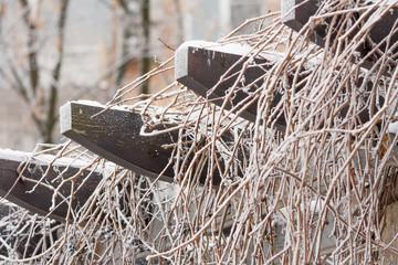 frozen park winter day