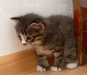 month kitten