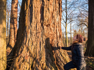 Young woman admires big mammoth tree