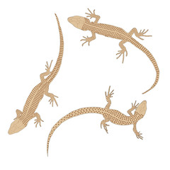 Three lizards with a long tail. Top view.