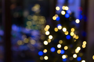 Christmas trees blurry background