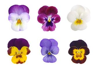 Fotobehang Pansies Fleurs de Viola cornuta