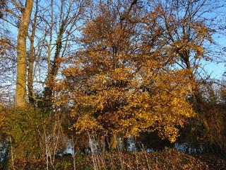 Arbres d'automne.