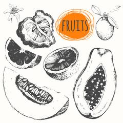 Set of hand drawn melon, papaya, bergamot, kumquat, orange.
