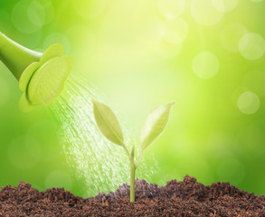 Green sprout growing from..