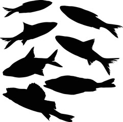 set of seven freshwater fish silhouettes on white