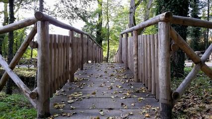 Ponte di Legno in una Montagna nella Foresta
