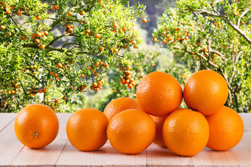 Fresh orange on wood table in garden