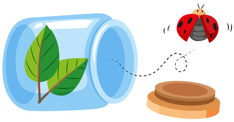Ladybug flying out of the jar