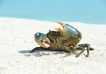 crab on beach