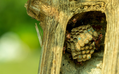 Hornet's nest with wasps with military guards.
