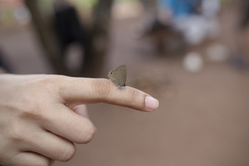 Small butterfly on hand