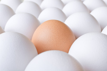 Background with many white and one brown fresh chicken egg