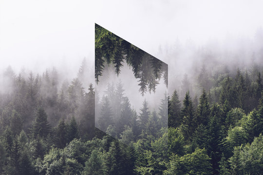 Foggy Evergreen Forest with Inverted Polygon