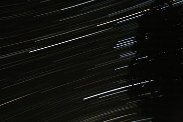 Star Trails Horizontal Evergreen