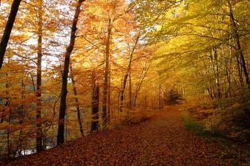 Nördlicher Steigerwald im Herbst, Unterfranken, Bayern, Deutsch