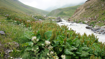 River at Greater Caucasus Mountain Range