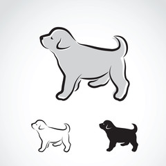 Vector image of an labrador puppy on white background