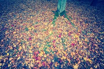 Vintage photo of autumnal forest landscape