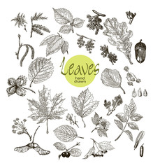 Collection of highly detailed hand drawn leaves, fruit and inflorescence  isolated on white background