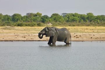 elephant, Loxodonta africana, at the waterhole Nyamandlovo in Hwange National Park, Zimbabwe