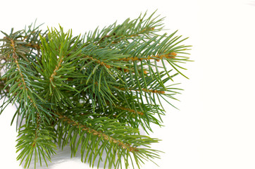 tree branch on a white background green Christmas