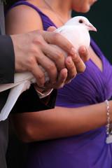 Mann hält Taube in den Händen