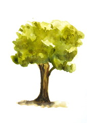 Single green tree, watercolor painting
