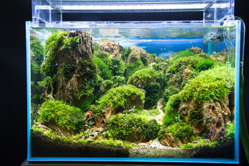 Jean growing corals in the aquarium.