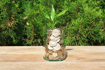 Plant growing in coins outside