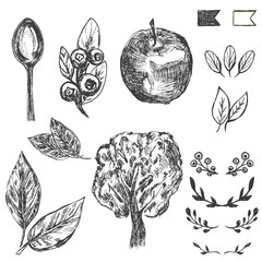 Set of hand drawn farm and organic elements