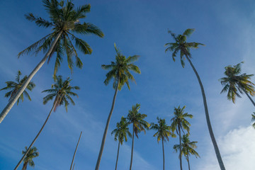 View of coconut tree taken from low angle