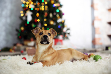 Small cute funny dog playing with Santa hat on Christmas tree background