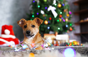 Small cute funny dog with garland on Christmas background