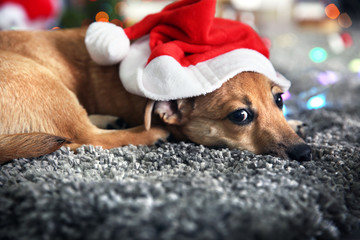 Small cute funny dog with garland and Santa hat on Christmas background