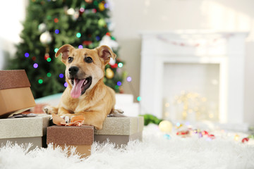 Small cute funny dog with boxes and Christmas tree on light background
