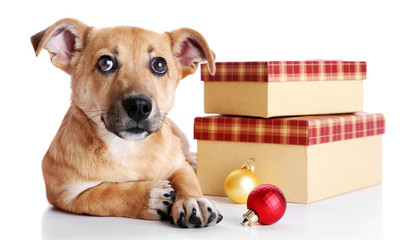 Small funny cute dog with gifts and Christmas toys, isolated on white