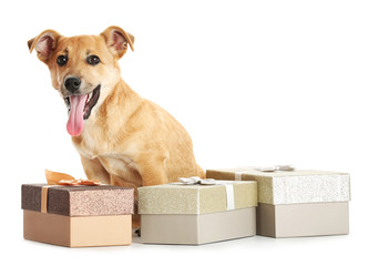 Small funny cute dog with gift boxes, isolated on white