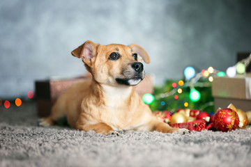 Small cute funny dog with Christmas gifts and accessories on light background