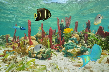 Colorful tropical fish and marine life underwater