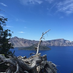 Branch Above Crater Lake, OR
