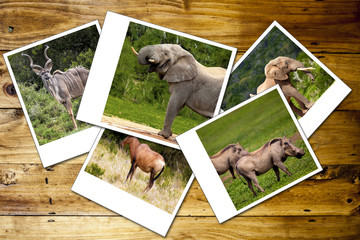 Collage of photos of African wild animals.