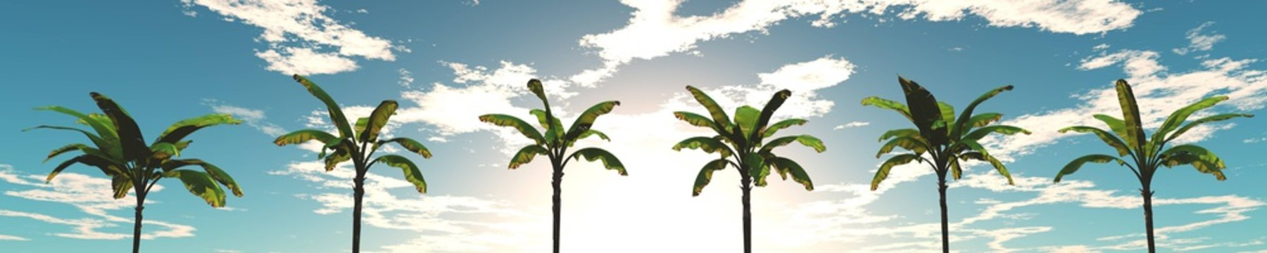 view of palm trees in the sky, banner