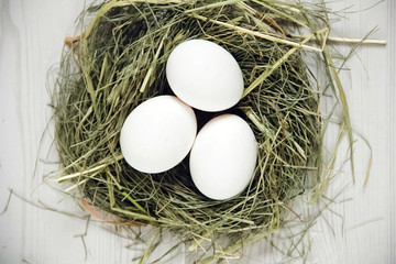 eggs in the manger