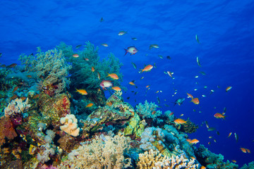 Colorful Fish and corals On Reef  in red sea