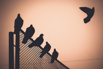 The dove is trying to take off from the gate.