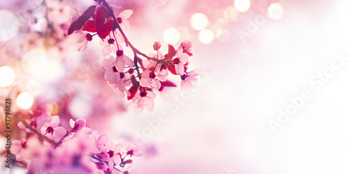 Wall mural Spring blossom border with pink blooming tree